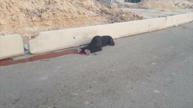 قوات الكيان الإسرائيلي يطلقون النار على امرأة فلسطينية على حاجز قلنديا في الضفة الغربية