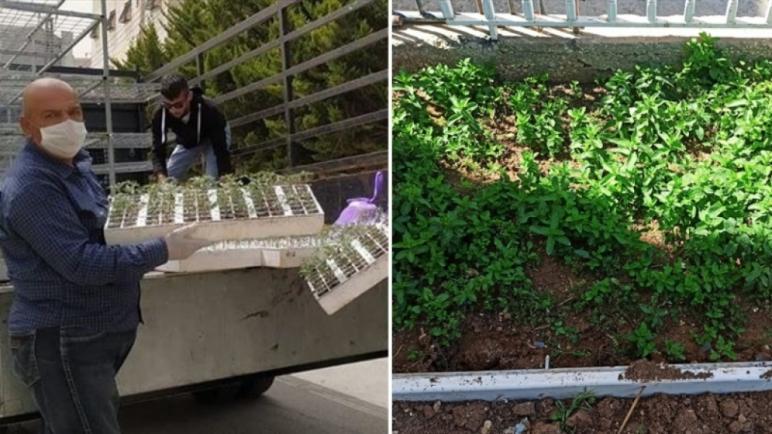 تشجع فلسطين الناس على زراعة خضرواتهم بأنفسهم خلال أزمة كورونا