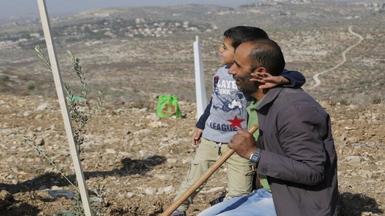 إطلاق حملة في مدينة أنشخيدة الهولندية لإرسال أشجار الزيتون إلى فلسطين لدعم المزارعين