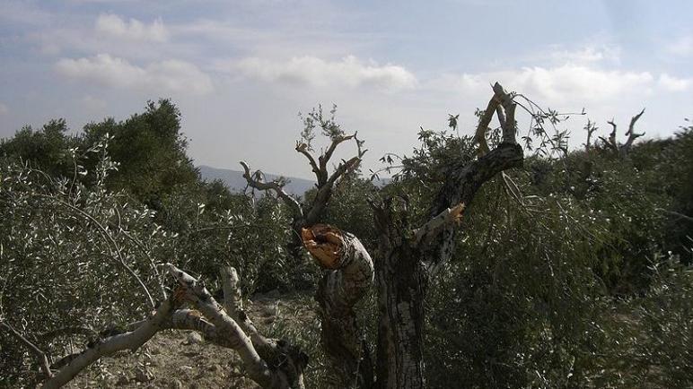 تقارير الأمم المتحدة: إعتداءات المستوطنين على الفلسطينيين تتزايد بشكل حاد و إلى متى سيصمت العالم عن ذلك