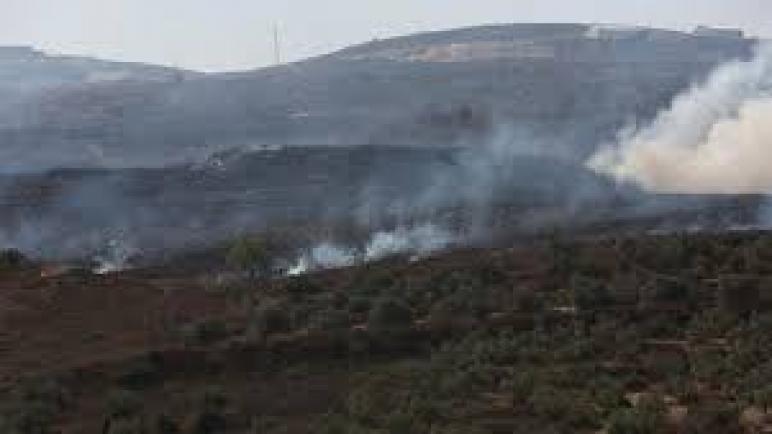 حان موسم حصاد الزيتون في فلسطين: أشجار الزيتون تقطع أو تحرق مجدداً من قبل المستوطنين