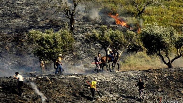 بدأ موسم حصاد الزيتون في فلسطين وبدأت معه هجمات المستوطنين الإسرائيليين على المزارعين والأشجار والمحاصيل