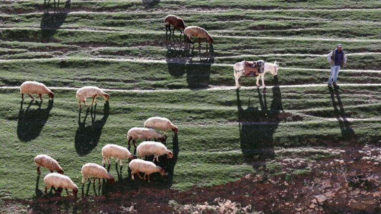 الكيان الإسرائيلي يعلن عن افتتاح سبع محميات طبيعية في الضفة الغربية